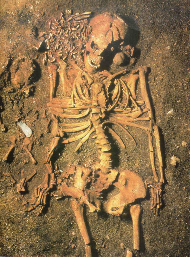 Jonge vrouw van 18 jaar met naast zich haar pasgeboren babyzoon. De moeder draagt als versiering tanden op vergane kleding. De zoon ligt onder de rode oker op de botten van een zwanenvleugel. 5000 v. Chr. Mesolithicum. Vedbaek-begraafplaats bij Kopenhagen.